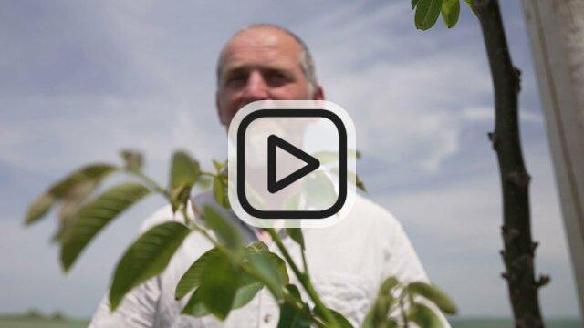 Projekt zum Wissenstransfer und Umsetzung von Agroforst-Systemen in Österreich