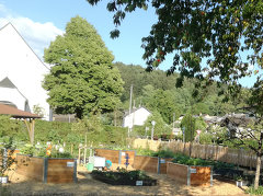Obst- und Gartenbauverein Schlins