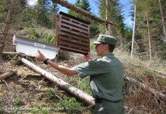 Abteilung Forstwirtschaft